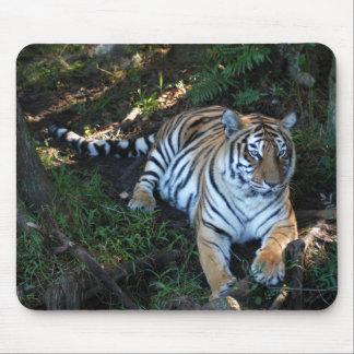 Tiger-China-Doll-b-5 Tapetes De Raton