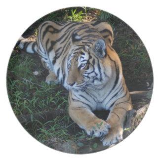 Tiger-China-Doll-b-6 Plato De Comida