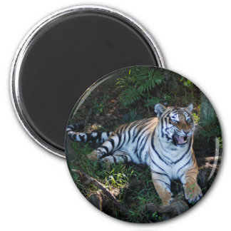 Tiger-China-Doll-b-7 Magnet