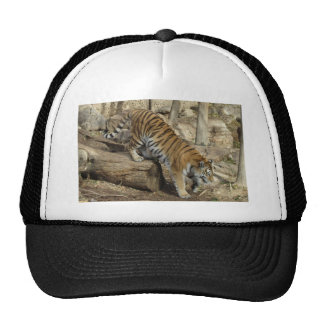 Tiger Climbing Ball Cap Hats