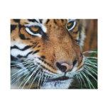 Tiger close up canvas print