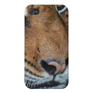 Tiger close up iPhone 4 cover