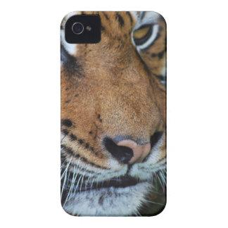 Tiger close up photo iPhone 4 Case-Mate case