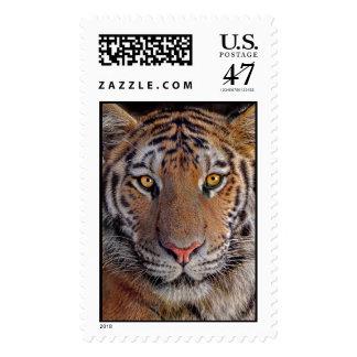 Tiger Close-Up Postage
