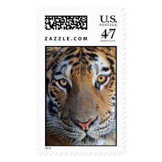 Tiger Close Up Postage Stamp