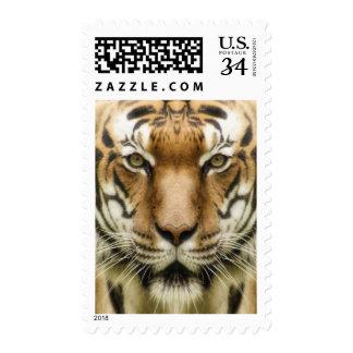 Tiger Close-Up postage stamps