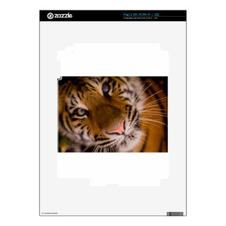 Tiger Close-Up View Decal For The iPad 2