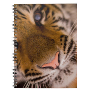 Tiger Close-Up View Notebook