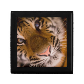 Tiger Close-Up View Trinket Boxes
