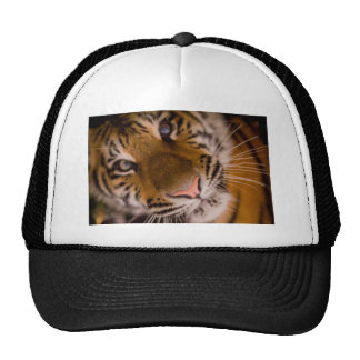 Tiger Close-Up View Trucker Hat