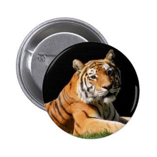 Tiger Closeup Pins