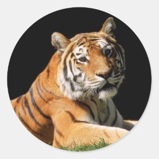 Tiger Closeup Classic Round Sticker