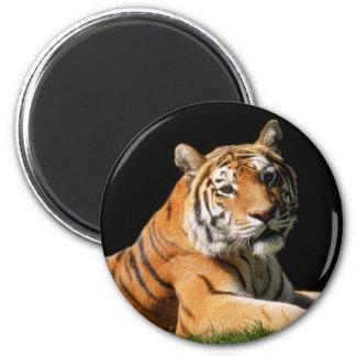 Tiger Closeup Magnet