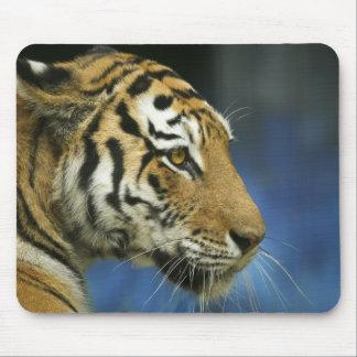 Tiger CloseUp Sideways Photograph Mouse Pad