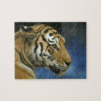 Tiger CloseUp Sideways Photograph Puzzle