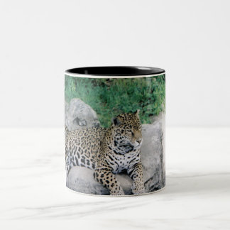 Tiger Coffee Cup