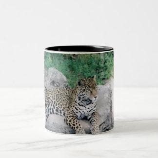 Tiger Coffee Cup Mugs