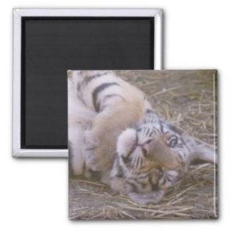 Tiger cub 2 inch square magnet