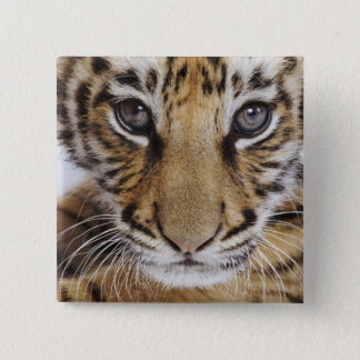 Tiger Cub (2 Month Old) Pinback Button