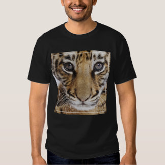 Tiger Cub (2 Month Old) T Shirt