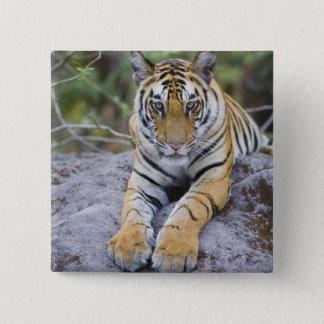 Tiger cub, Bandhavgarh National Park, India Button
