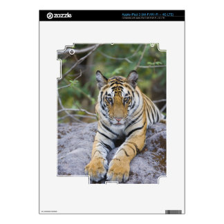 Tiger cub, Bandhavgarh National Park, India Decals For iPad 3