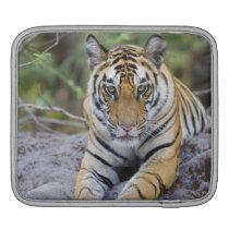 Tiger cub, Bandhavgarh National Park, India iPad Sleeve
