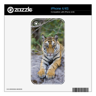 Tiger cub, Bandhavgarh National Park, India Skin For The iPhone 4