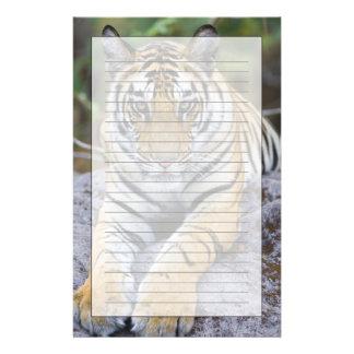 Tiger cub, Bandhavgarh National Park, India Stationery