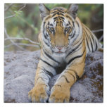 Tiger cub, Bandhavgarh National Park, India Large Square Tile