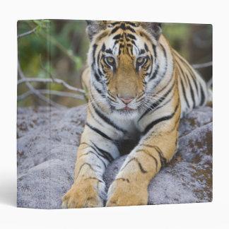 Tiger cub, Bandhavgarh National Park, India Vinyl Binder
