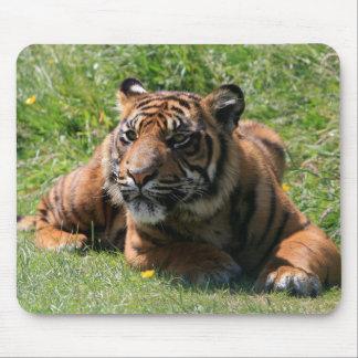 tiger cub beautiful portrait mousepad, gift idea mouse pad