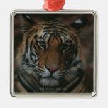Tiger Cub Christmas Ornaments