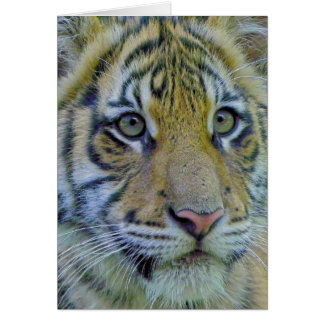 Tiger Cub Close Up Portrait Card