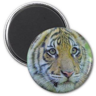 Tiger Cub Close Up Portrait Magnet