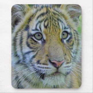 Tiger Cub Close Up Portrait Mouse Pad