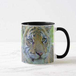 Tiger Cub Close Up Portrait Mug