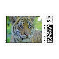 Tiger Cub Close Up Portrait Postage