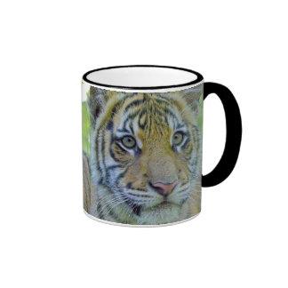 Tiger Cub Close Up Portrait Ringer Mug
