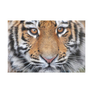 Tiger cub face canvas print