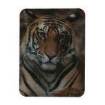 Tiger Cub Flexible Magnets