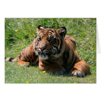 tiger cub greeting card blank for your message