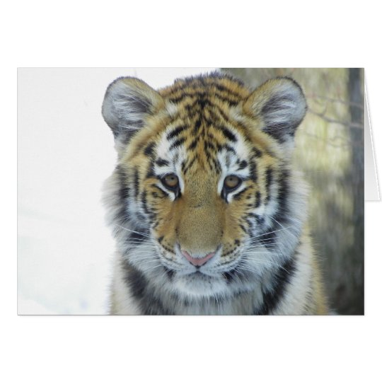 Tiger Cub In Snow Close Up Portrait Card