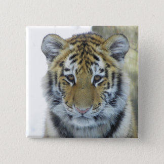 Tiger Cub In Snow Close Up Portrait Pinback Button