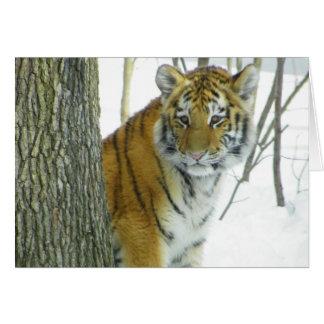 Tiger Cub In Snow Peeking Around Tree Card