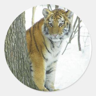 Tiger Cub In Snow Peeking Around Tree Classic Round Sticker