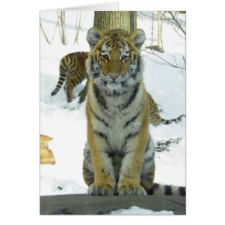 Tiger Cub In Snow Portrait Card