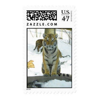 Tiger Cub In Snow Portrait Postage