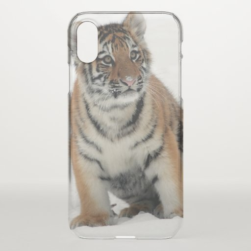 Tiger Cub in the Snow Photograph iPhone X Case