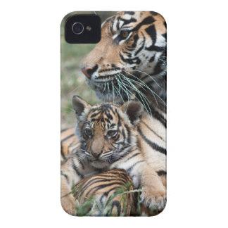 Tiger Cub iPhone 4 Cover